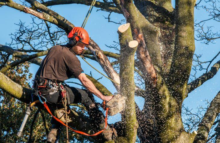 Prix élagage arbres